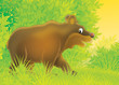 brown bear walking in a forest