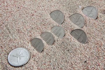 United Arab Emirates coins in sand