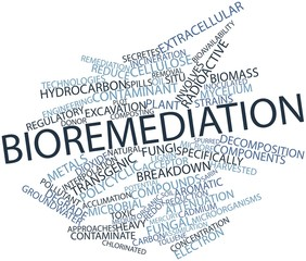 Word cloud for Bioremediation