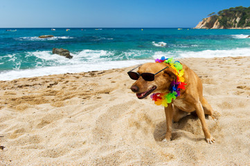 Dog on tropical vacation