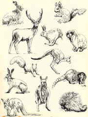 animals collection (black outlines)