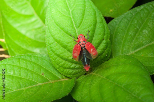 insect on green leaf,thailand