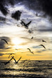 dramatic dark cloudy sunset over the ocean with flying seagulls