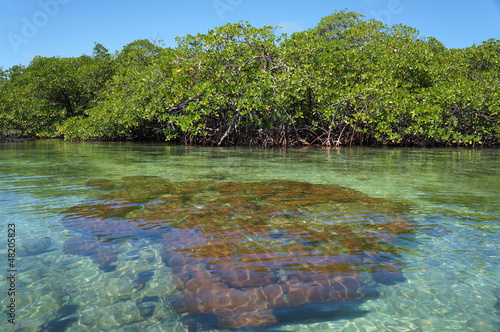 Hard coral in shallow waters