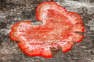 old rough wood background texture with red mildew