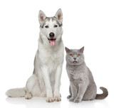 Cat and dog together on a white background