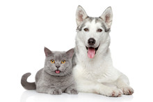 "Постер, картина, фотообои ""Cat and dog together on a white background"""