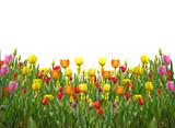 Fototapete Frühling - Hübsch - Blume