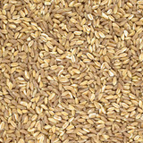 Spelt organic wheat raw cereal close up texture or background poster