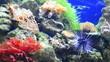sea-urchin, corals