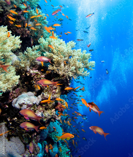 Fototapeta Photo of coral colony