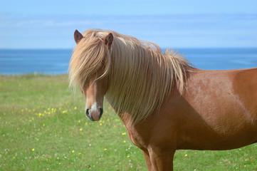 maxi criniera cavallo