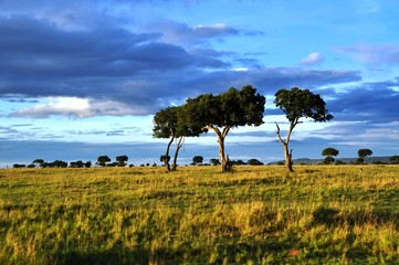 trees and cloudy sky landscape in the Masai mara, Kenya