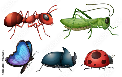 Various insects and bugs