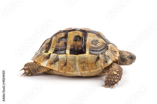 In de dag Schildpad Turtle isolated on white background