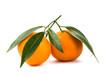 tangerines isolated