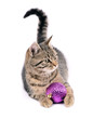 Kitten, purple ball,isolated white background