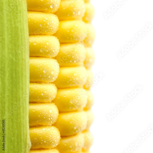 Grains of Ripe Corn with Water Droplets  / Isolated / Extreme Ma