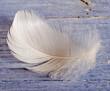 Frohe Ostern: Weiße, zarte Feder vor blauem Holzbrett