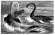 Prehistory : Ichtyosaurus & Plesiosaurus - Lias