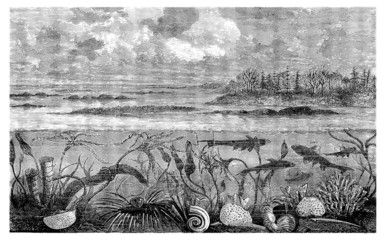 Prehistory - Sea Animals - Carboniferus
