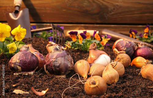 Spoed canvasdoek 2cm dik Iris plantation de bulbes et de pensées