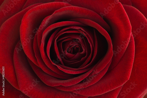 canvas print picture Red rose close-up
