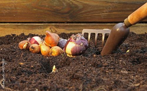 Staande foto Iris plantation de bulbes et de pensées