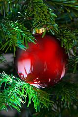 Weihnachten rot gruen