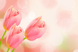 Fototapety Tulip flowers