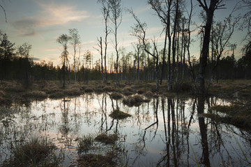 Wet marsh before sundawn, Finnmarken, Pajso, Sweden