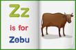 A picture of a zebu in a book