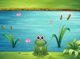 Fototapety A river and a frog