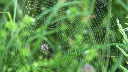 Spider fooling around