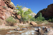 rapids of Virgin River