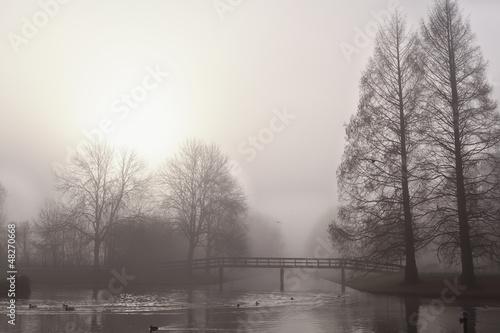 trees and bridge in fog