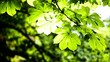 Beautiful green leaves and bright sun over blurred background