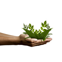 manos con plantas
