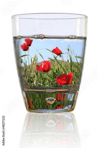 Glass of spring. Field of red poppies in a glass of water