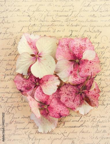 Hydrangea flower petals