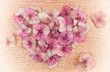 Romantic vintage hydrangea flower in the shape of a pink heart