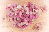 Fototapety Romantic vintage hydrangea flower in the shape of a pink heart