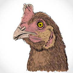 Detailed sketch illustration of chicken head