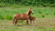 Pferd vid 05