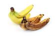Frische und überreife Bananen