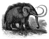 Prehistory - Woolly Mammoth