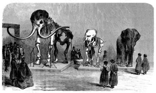 Prehistory/Paleontology : Museum (19th century)