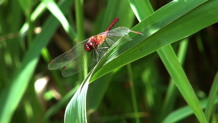 dragonfly on a pond