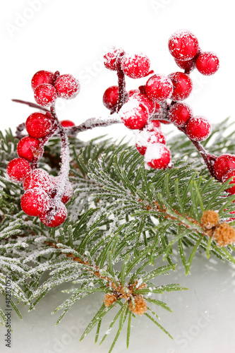 Rowan berries with spruce covered with snow isolated on white