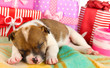 Beautiful little puppy sleeping surrounded by gifts